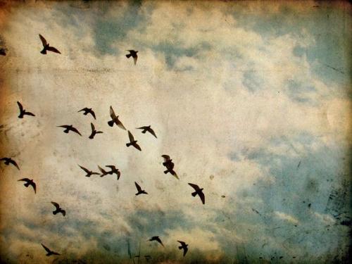birds03.jpg