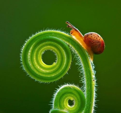 escargot01.jpg